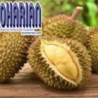 6 Khasiat Unik Durian Yang Bagus Untuk Kesehatan Tubuh