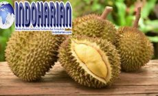 Permalink to 6 Khasiat Unik Durian Yang Bagus Untuk Kesehatan Tubuh