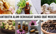 Permalink to 6 Antibiotik Alami Berkhasiat Saingi Obat Modern!