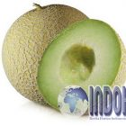Setelah Diteliti, Manfaat Melon Obat Kanker Paling Ampuh!