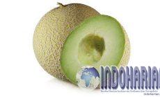 Permalink to Setelah Diteliti, Manfaat Melon Obat Kanker Paling Ampuh!