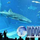 Okinawa Churaumi Aquarium Wajib Anda Kunjungi Saat Ke Jepang
