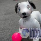 HEBAT! Robot Anjing Berteknologi AI Sudah Rilis Di Jepang!