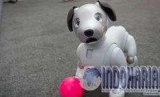 Permalink to HEBAT! Robot Anjing Berteknologi AI Sudah Rilis Di Jepang!