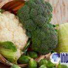 Wow, Ternyata Kembang Kol Dan Brokoli Ini Dapat Mengatasi Kanker Kulit