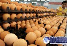 Tiga Cara Ini Bisa Mengetahui Telur Segar Dan Rusak