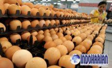 Permalink to Tiga Cara Ini Bisa Mengetahui Telur Segar Dan Rusak