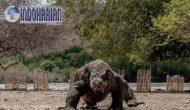 Permalink to Pulau Komodo Akan Dibuat Menjadi Jurassic Park NTT