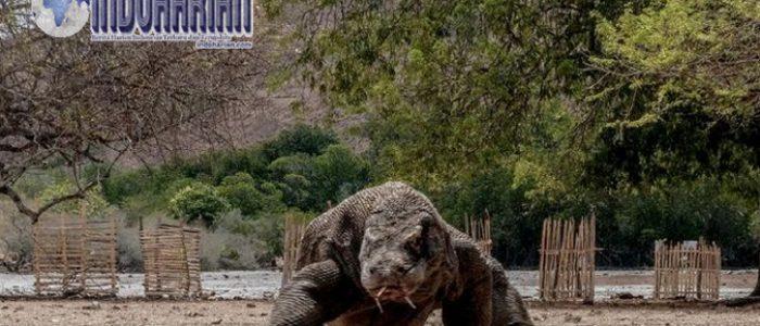 Pulau Komodo Akan Dibuat Menjadi Jurassic Park NTT