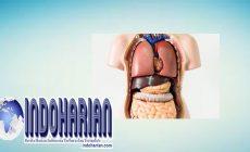 Permalink to Inilah Keistimewaan 7 Organ Tubuh Yang Dapat Menyembuhkan Diri Sendiri
