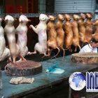 Satu Keluarga Keracunan Menyantap Daging Anjing, Satu Diantaranya Meninggal