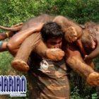 Sangat Kuat! Pria ini Sanggup Gendong Bayi Gajah Berbobot 100kg
