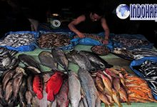 Wajib Diketahui 6 Ikan Berbahaya yang Sebaiknya Tidak Dikomsumsi