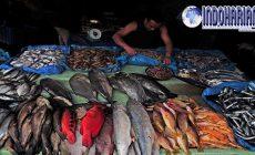 Permalink to Wajib Diketahui 6 Ikan Berbahaya yang Sebaiknya Tidak Dikomsumsi