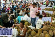 Kabar Gembira Bagi Pecinta Buah Durian, Blok M Square Adakan Durian Fair