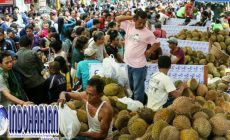 Permalink to Kabar Gembira Bagi Pecinta Buah Durian, Blok M Square Adakan Durian Fair