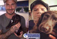 Ini Biaya Pelatih Anjing David Beckham?