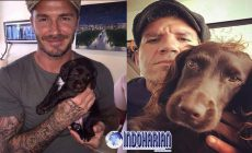 Permalink to Ini Biaya Pelatih Anjing David Beckham?
