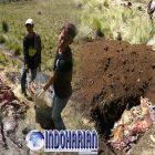 Delapan Bangkai Rusa Ditemukan di Gunung Lawu, Dugaan Kuat Karena…