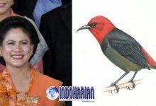Jenis Baru Burung Iriana Widodo, Menjadi Penghargaan Ibu Negara