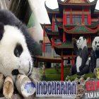Bangga!! Indonesia Dipercaya Mendapatkan Pinjaman Sepasang Panda Raksasa